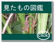 観察した動・植物の写真集です。